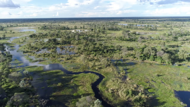 Aerial view of the waterways and lagoons of the Okavango Delta video