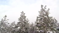 Aerial view of the white forest video
