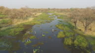 Aerial view of tourists on Mokoro ride - traditional canoe in the Okavngo Delta video
