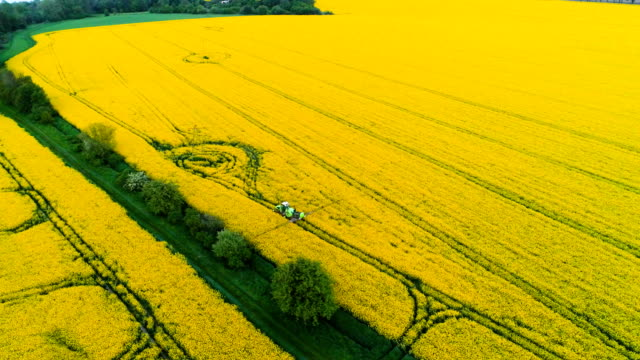 Aerial view of tractor spraying canola field. video