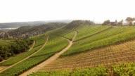 Aerial view of vineyards in Stuttgart, Germany video