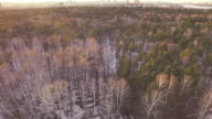 Aerial view on a forest during winter sunset video