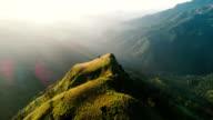 Aerial view on tea plantation in Sri Lanka video