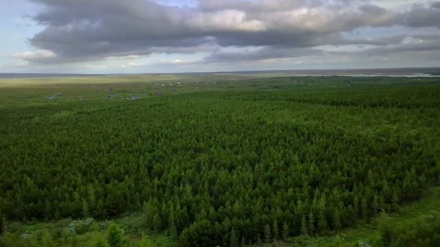 Aerial view over thick pine forest above tree tops video