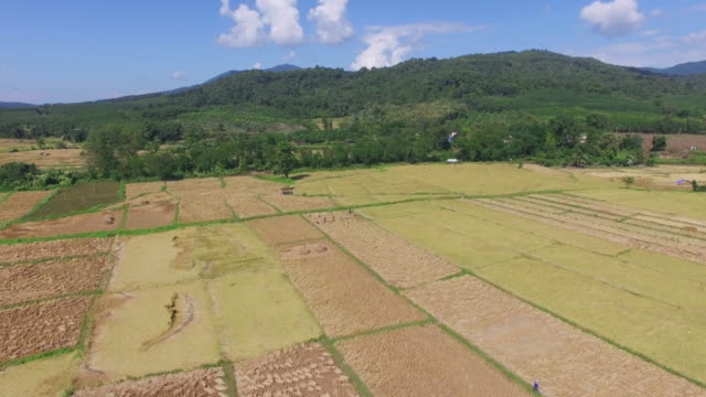 Aerial view shot of farmers are harvesting video