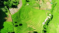 Aerial view Terraced rice paddy field video