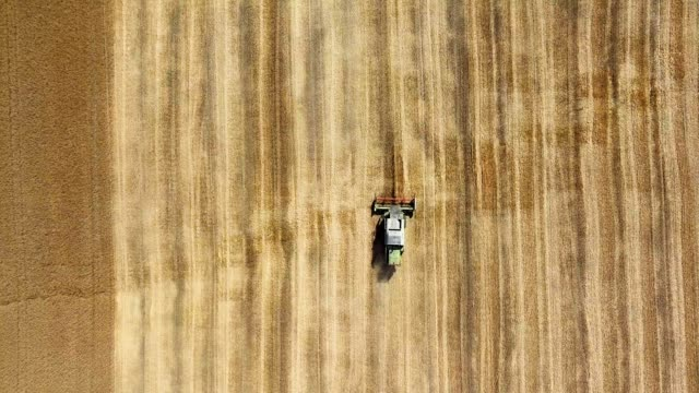 Aerial view: the combine is reaping the last narrow strip of wheat. The finish of harvesting. video