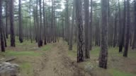 Aerial View Through the Forest. Flying over the beautiful forest trees. Aerial camera shot. Landscape panorama. Trees, sun rays, light. video