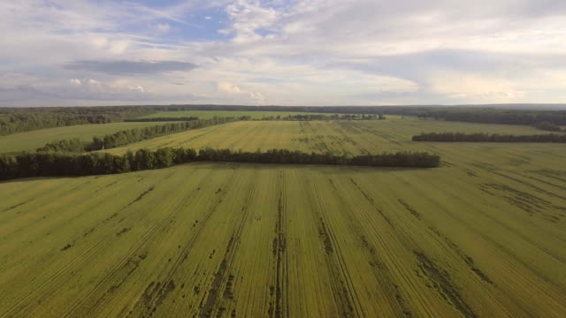Aerial view:Flying over green field video