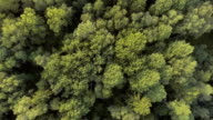 Aerial view.Flying over the forest video