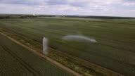 Aerial view:Irrigating machine in a potato field video