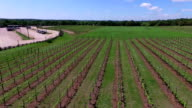 Aerial Wine to Market or Farm to Market in Vineyard Aerial Fly Over video