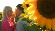 HD: Affectionate Couple In The Sunflower Field video