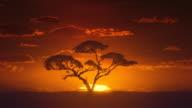 Africa. Sun inferior mirage. African timelapse sunrise. Acacia tree. video