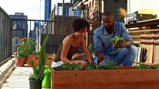 African American couple gardening - SLOW MOTION video