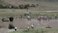 African animals together in a waterhole video