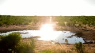 WS African Birds By The Waterhole video