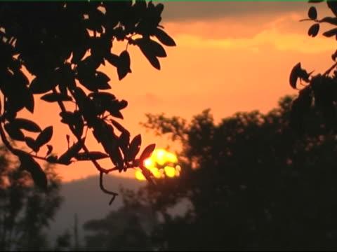 African daybreak video