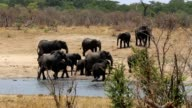 African elephant Africa safari wildlife and wilderness video