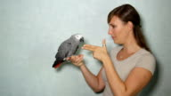 CLOSE UP: African grey parrot playing with girl, pretending being shot and dead video