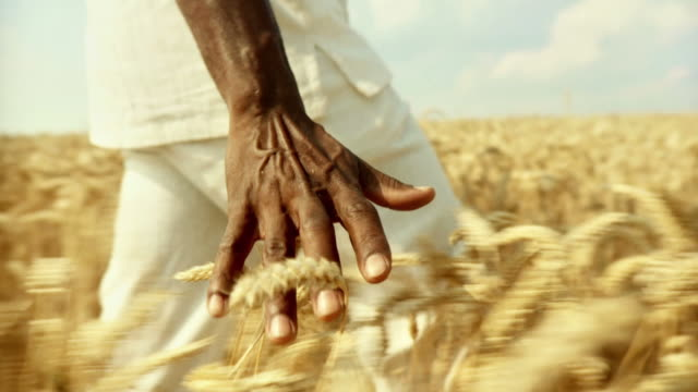 HD SLOW-MOTION: African Man Touching Wheat video