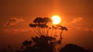 African sunrise / sunset - HD & PAL video