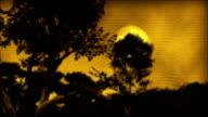African Sunset Halloween Amazon Rainforest Landscape Baobab Trees Art video