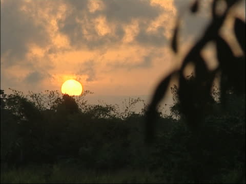 African Sunset. video