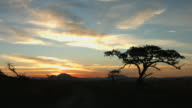 African Wilderness Sunset video