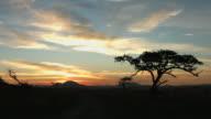 African Wilderness Sunset video