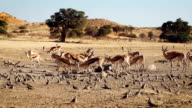 African Wildlife in Slow Motion video