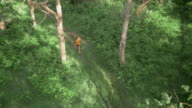 AERIAL African-American woman running on forest trail video