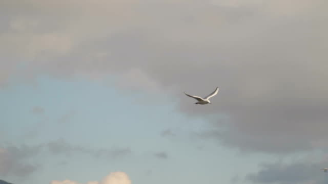 Against the background of a cloudy sky, a gull flies video