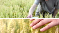 Agribusiness. video