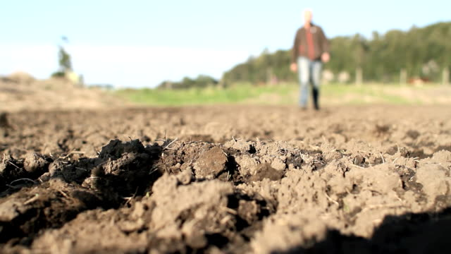 agricultor walking through the field video