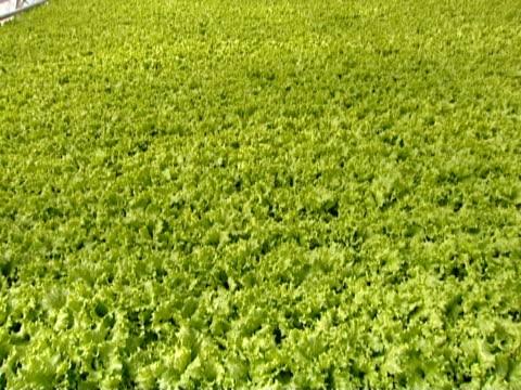 Agricultural farm. video