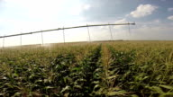 Agricultural Irrigation System in Action video