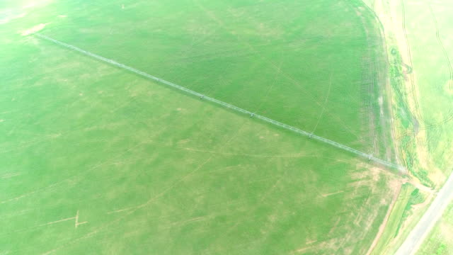 Agricultural Irrigation System Watering Corn Field on Summer Day video