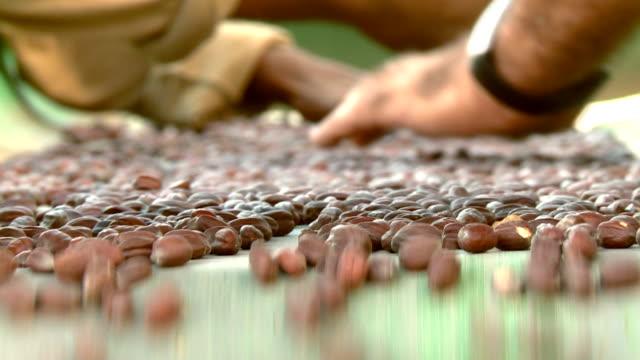 Agricultural jojoba nuts on the conveyor belt video