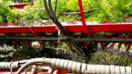 Agricultural machinery for harvesting of carrots video