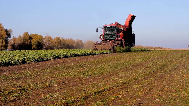 agriculture and harvesting video