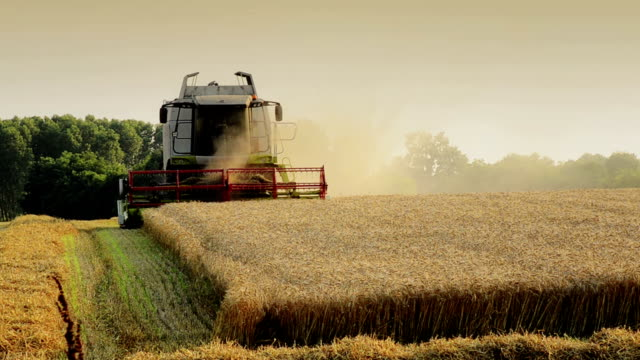 agriculture, combine harvester video
