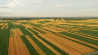 AERIAL Agriculture countryside video