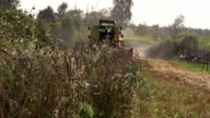 agriculture farm harvester thrash grain in village video