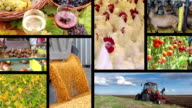 Agriculture - Food Industry Multiscreen video