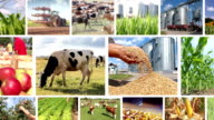 Agriculture - Food Production Multiscreen video