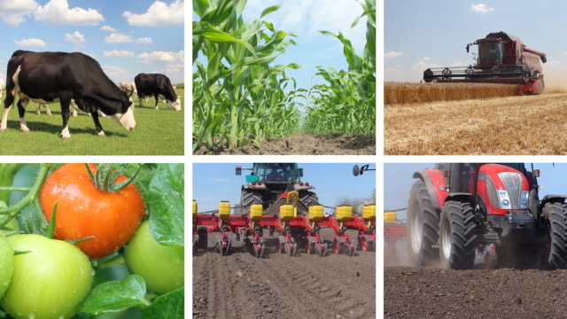 Agriculture, Food Production video