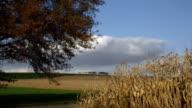 Agriculture harvest landscape video
