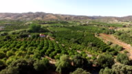 Agriculture in the South of Portugal. Rural landscape. Orange and lemon gardens, grape plantations. video