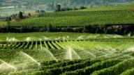 Agriculture Irrigation Sprinkler Okanagan Vineyard video